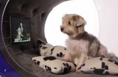 Samsung Dream Doghouse Is Super Awesome