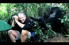 Jonathan Rossouw hangs out with Gorillas in Uganda
