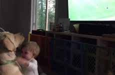 Dog Refuses to Turn Away from 2015 Women's World Cup to Acknowledge Baby
